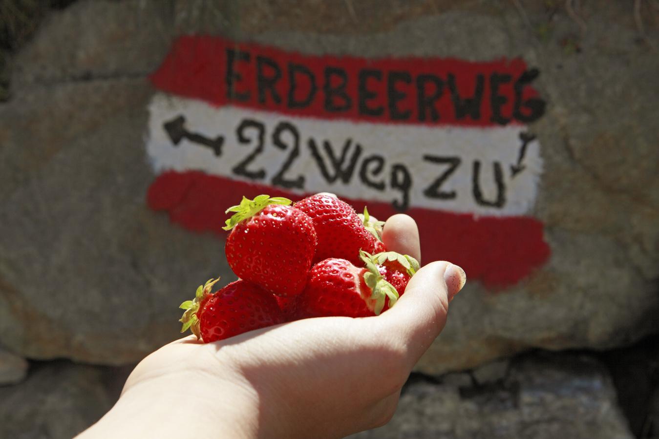 Sentiero delle fragole in Martello una gita per la famiglia e gli amanti delle fragole